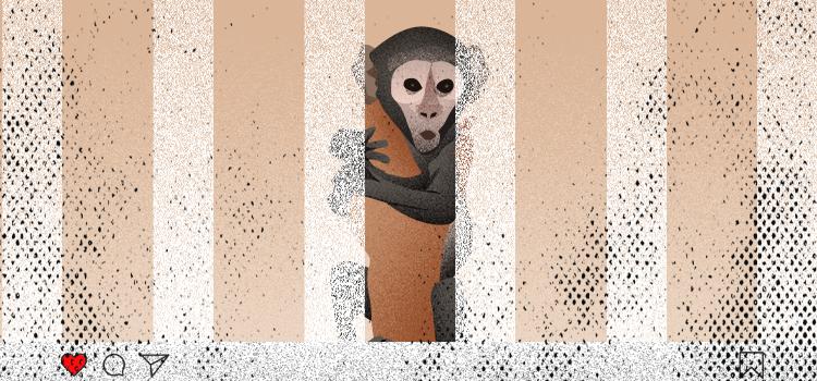 Investigating Underground Wildlife Trade on Instagram